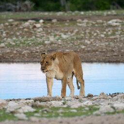 Namibië-Etosha National Park-Hoogtepunt 1