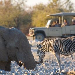 Namibië-Etosha National Park-hoogtepunt (24)