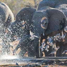 Namibië-Etosha National Park-hoogtepunt (28)