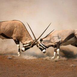 Namibië-Etosha National Park-hoogtepunt (31)