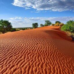 Namibië-Hoogtepunt8-Kalahari Woestijn