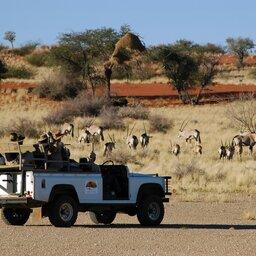 Namibië-Kalahari-hoogtepunt (3)