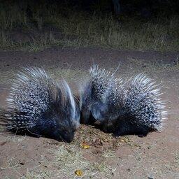 Namibië-okonjima-resized (12)