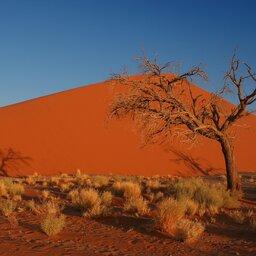 Namibië-Sossusvlei-hoogtepunt (2)