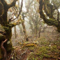 Nieuw-Zeeland - Marlborough jungle