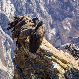 Peru - Valle del Colca - Arequipa - Colca canyon (11)