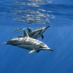 rsz_la-reunion-westkust-excursie-cruise-dolfijnen-credit-irt-cedric-peneau