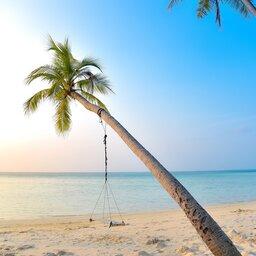 rsz_malediven-schommel-aan-palmboom