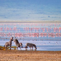 rsz_tanzania-ngorongoro-krater-zebras-en-flamingos