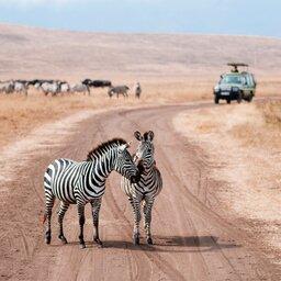 rsz_tanzania-ngorongoro-zebras-jeep
