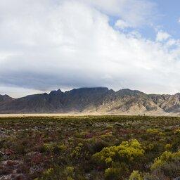 rsz_zuid-afrika-hoogtepunt-westkaap-overberg