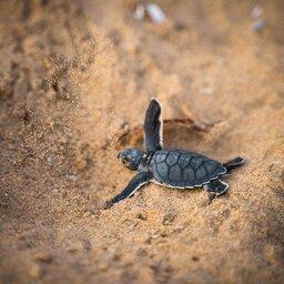 Seychellen-Denis-Island-Excursie-Turtles-hatching-season-david-leveque-unsplash