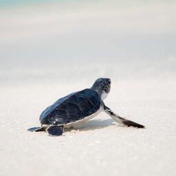 Seychellen-Denis-Island-Excursie-Turtles-hatching-season-jcob-nasyr-unsplash