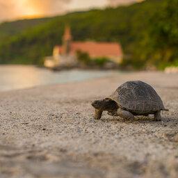 Seychellen-La-Digue-Le-Natautique-Waterfront-Hotel-schildpad-strand