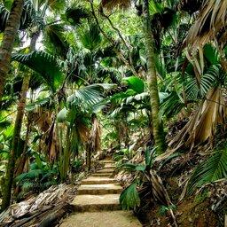 Seychellen-Mahé-Excursie- Enchanted Walk In The Vallee de Mai-1