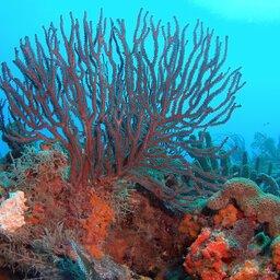 Seychellen-Variety Cruise (11)