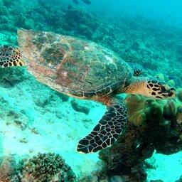 Seychellen-Variety Cruise (5)