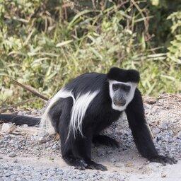 Oeganda-KibaleNationalPark