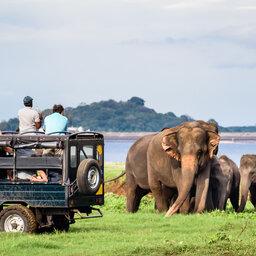 Sri-Lanka-Culturele-Driehoek-Excursie-Jeepsafari-in-Minneriya-NP-8