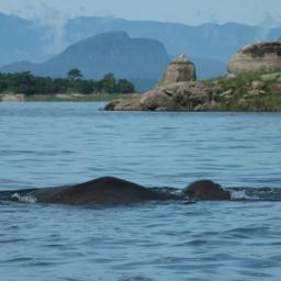 Sri-Lanka-Gal-Oya-National-Park-Olifant-2