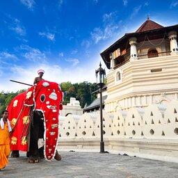 Sri Lanka-Kandy-hoogtepunt-festival1