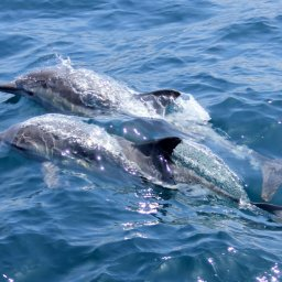 Sri-Lanka-Mirissa-Excursie-Privé-speedboot-of-catamaran-vanuit-Mirissa-naar-walvissen- en-dolfijnen-3