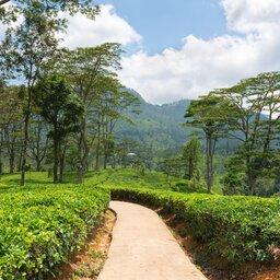 Sri Lanka-Nuwara Eliya-hoogtepunt-theeplantages1