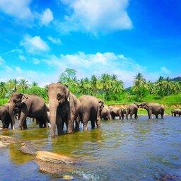 Sri Lanka-Pinnawela-hoogtepunt-elephant sanctuary2