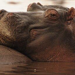 Tanzania-Lake Manyara-Hippo
