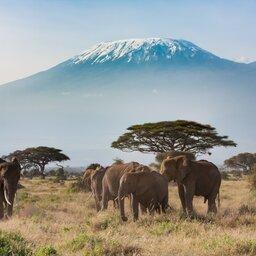 Tanzania-Mt Kilimanjaro-olifanten