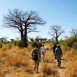 Tanzania-Ruaha NP-Mwagusi Camp-walking safari