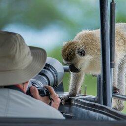 Tanzania-Tarangire NP-aap