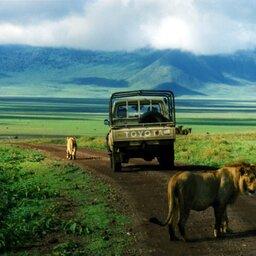 Tanzania-Tarangire NP-leeuwen en jeep