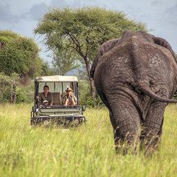 Tanzania-Tarangire-NP-Little-Chem-Chem-safari-olifant
