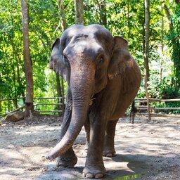 Thailand-Chiang-Mai-Excursie-Elephant-Discovery-Camp-1