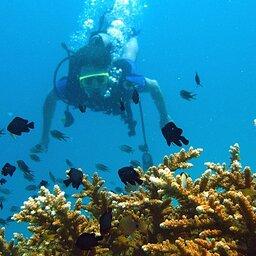 Thailand - Phi Phi Don - Koh Phi Phi - Zeavola resort  (3)