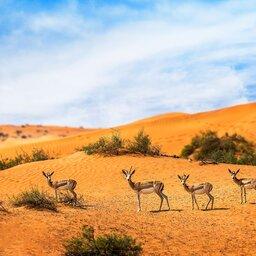 VAE-Ras Al Khaimah-Ritz Carlton Al Wadi Desert-omgeving