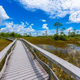 Verenigde staten - USA - VS - Everglades National Park (8)