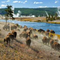 Verenigde staten - USA - VS - Wyoming - yellowstone national park (2)