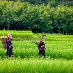 Vietnam-algemeen-stammen