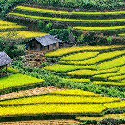 Vietnam-Sapa-Rijstvelden-3