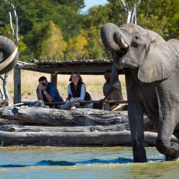 Zimbabwe-Hwange NP-Little Makalolo Camp (10)