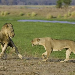 Zimbabwe-Mana Pools National Park (4)