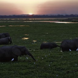 Zimbabwe-Mana Pools National Park (5)