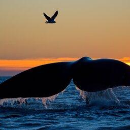 Zuid-Africa-Hoogtepunt7-Walvissen