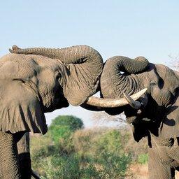 Zuid-Afrika-algemeen-spelende olifanten