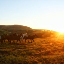 Zuid-Afrika-Drakensbergen-Montusi-Mountain-Lodge-paarden