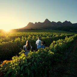 Zuid-Afrika-Kaapse-Wijnlanden-streek-5-koppel