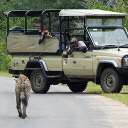 Zuid-Afrika-Kruger-Rhino-Post-Safari-Lodge-gamedrive