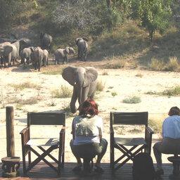 Zuid-Afrika-Kruger-Rhino-Post-Safari-Lodge-olifanten